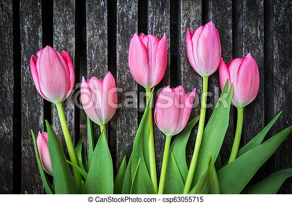 tulips on wooden background - csp63055715