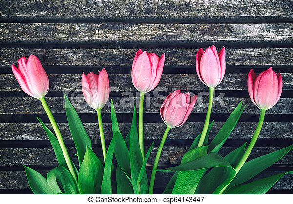 tulips on wooden background - csp64143447