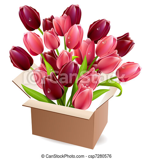 tulips, scatola, pieno, aperto - csp7280576
