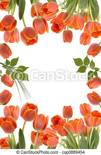Tulips - csp0889454