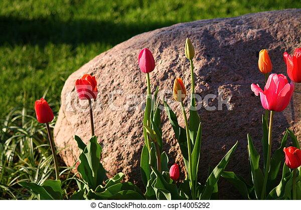 Tulips - csp14005292