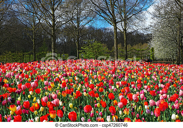 Tulpen tuin nederland keukenhof kleurrijke mooi tuin buiten