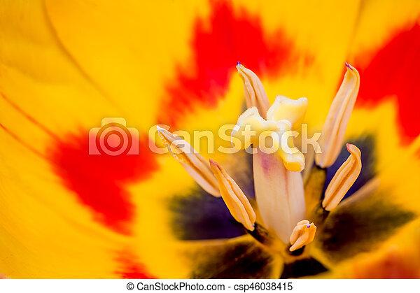 tulpenblüte, stempel - csp46038415
