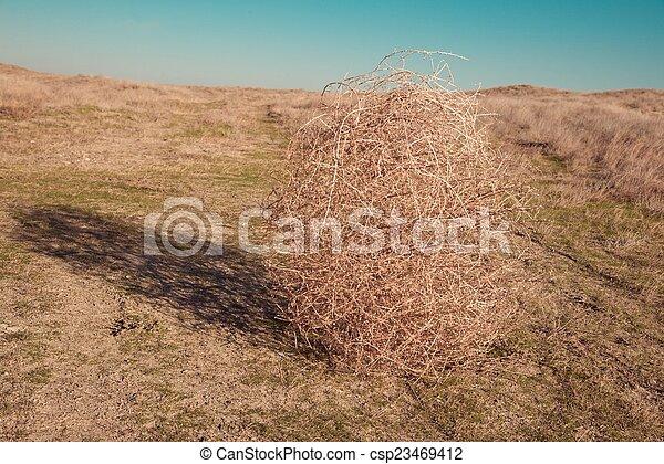 Tumbleweed on the field - csp23469412