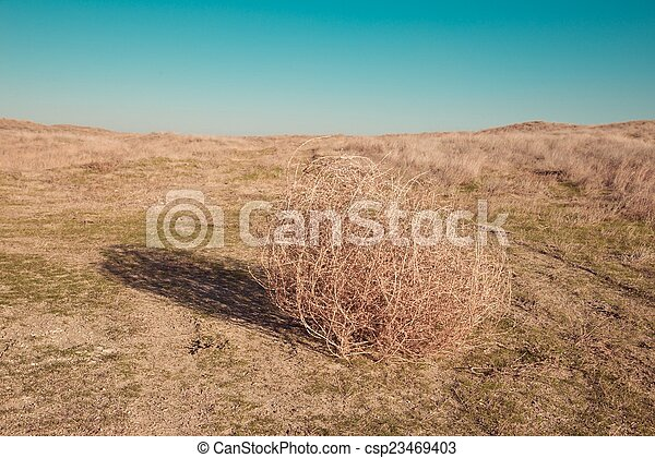 Tumbleweed on the field - csp23469403