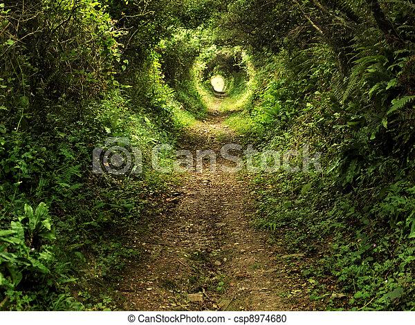 tunel, oczarowany, leśna ścieżka - csp8974680