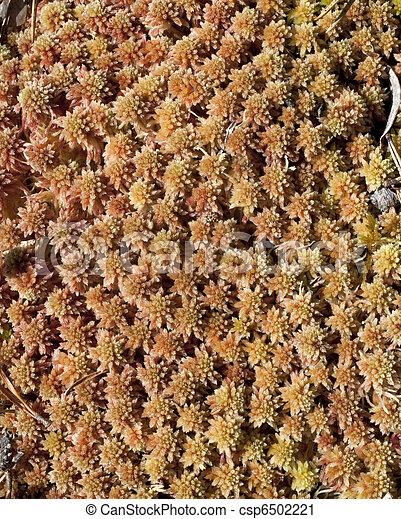 Naranja y marrón, moss de arveja de avena de avena - csp6502221
