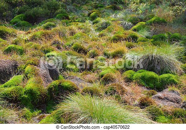 Peat bog moss en Polonia - csp40570622