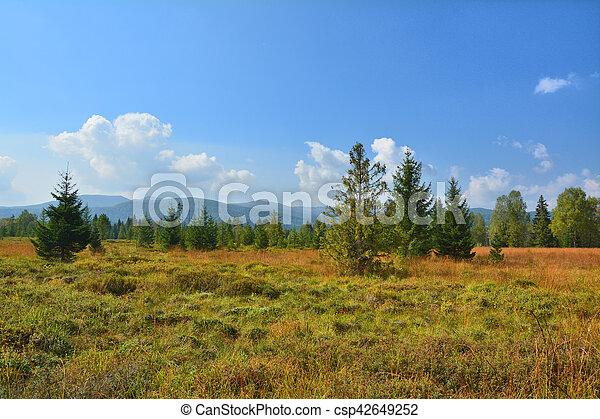 Paisaje de Peat Bog en Polonia - csp42649252