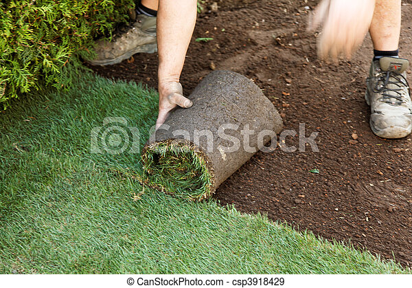 Turf is laid by gardener - csp3918429
