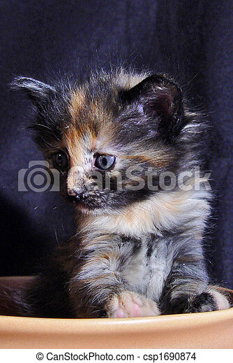817e09bc13 Turkish angora cat. Kitten of a turkish angora cat.