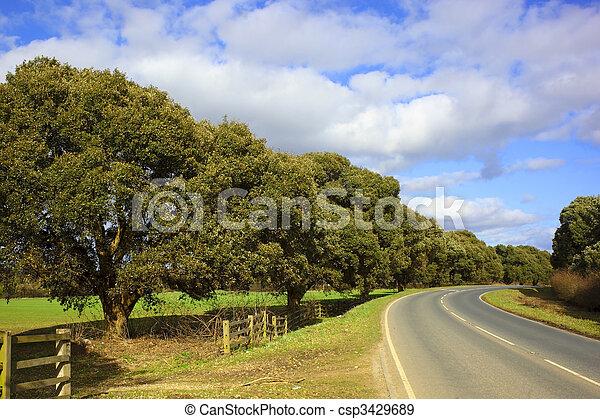 turners evergreen oak - csp3429689