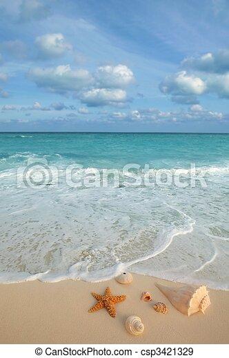 Conchas de mar estrellas de mar, arena tropical turquesa caribeña - csp3421329