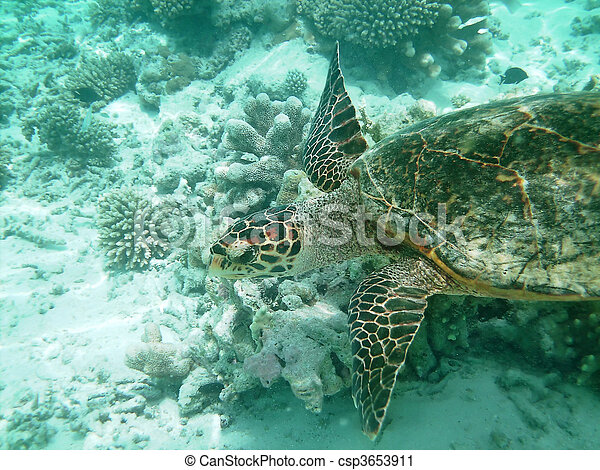 Turtle and coral reef - csp3653911