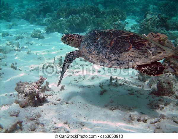 Turtle and coral reef - csp3653918