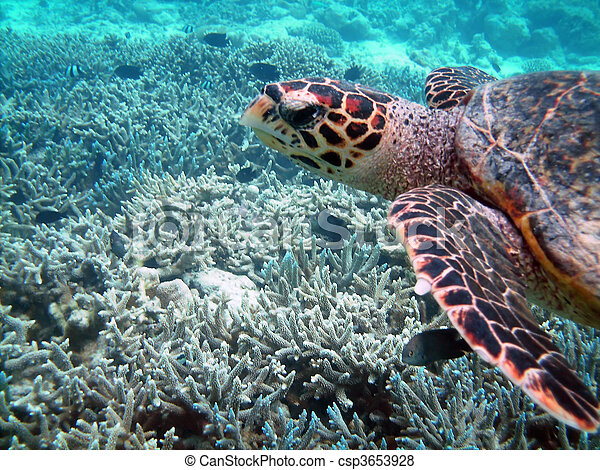 Turtle and coral reef - csp3653928