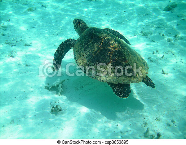 Turtle and coral reef - csp3653895