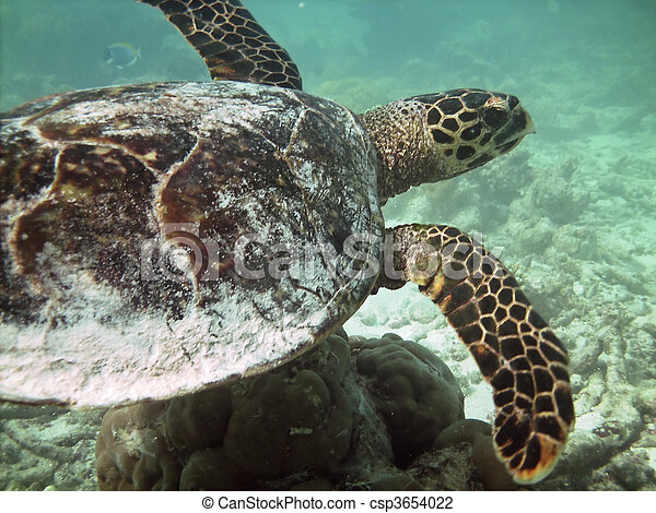 Turtle and coral reef - csp3654022