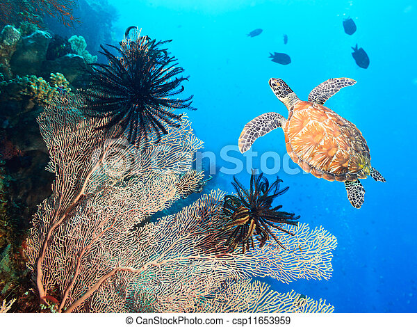 Turtle and coral - csp11653959