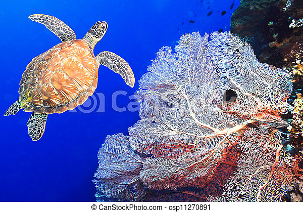 Turtle and coral - csp11270891