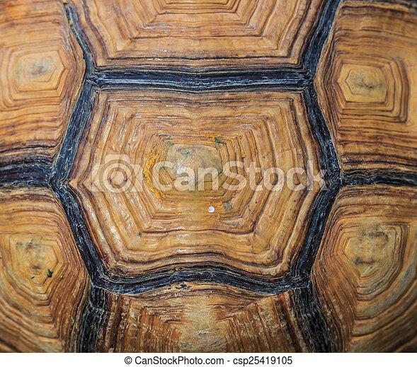 Turtle background - csp25419105