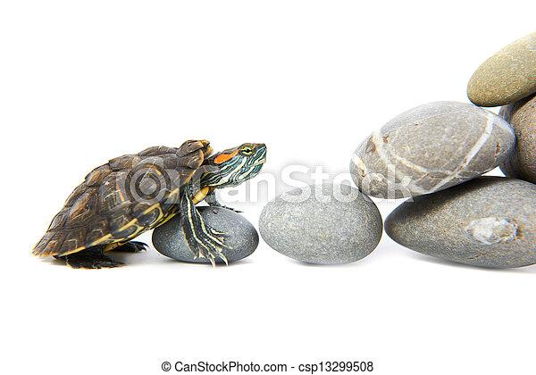Turtle klettert die Stufen hoch - csp13299508