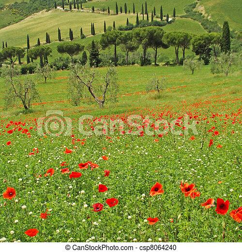 Tuscan idyll in spring, - csp8064240