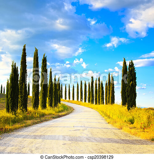 Tuscany, Cypress Trees white road rural landscape, Italy, Europe - csp20398129