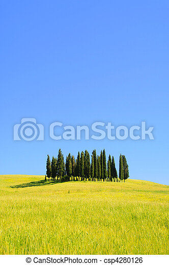 Tuscany forest 04 - csp4280126