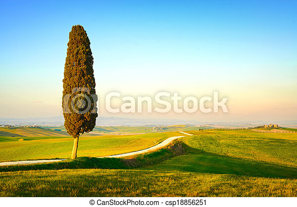 Tuscany, lonely cypress tree and white rural road on sunset. Siena, Orcia Valley, Italy, Europe. - csp18856251