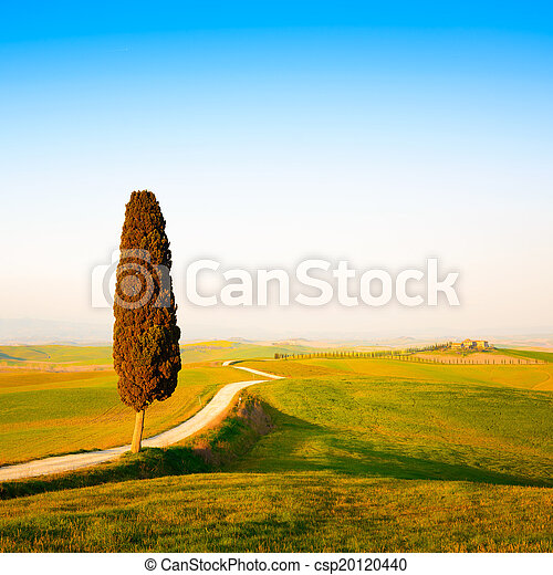 Tuscany, lonely cypress tree and white rural road on sunset. Siena, Orcia Valley, Italy, Europe. - csp20120440