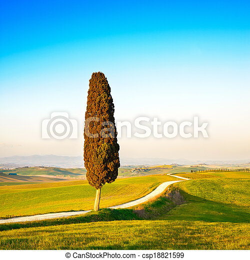 Tuscany, lonely cypress tree and white rural road on sunset. Siena, Orcia Valley, Italy, Europe. - csp18821599