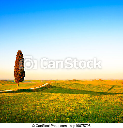 Tuscany, lonely cypress tree, white rural road and shadow on on sunset. Siena, Orcia Valley, Italy, Europe. - csp19075795