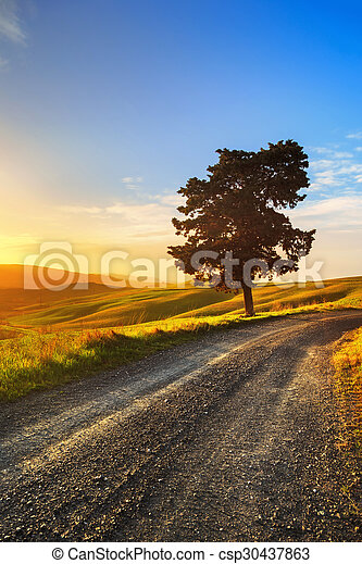 Tuscany, lonely tree and rural road on sunset. Volterra, Italy. - csp30437863