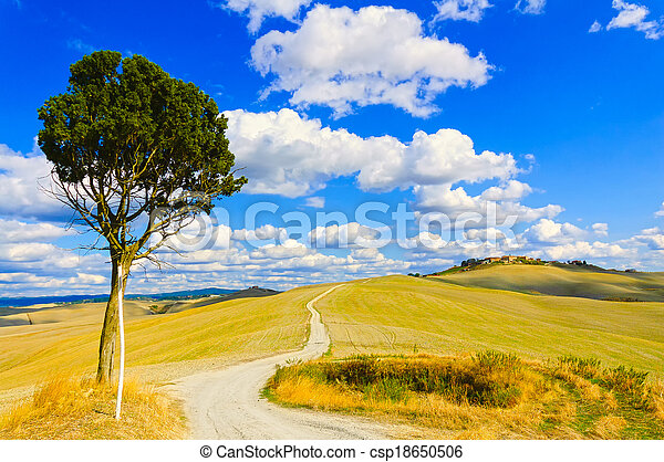 Tuscany, lonely tree and white rural road. Siena, Orcia Valley, Italy, Europe. - csp18650506