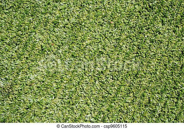 Tutto campo football tempo verde syntethic erba for Tuttocampo serie d
