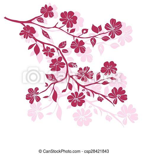 twig cherry blossoms - csp28421843