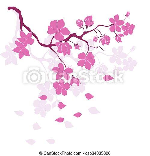 twig cherry blossoms - csp34035826