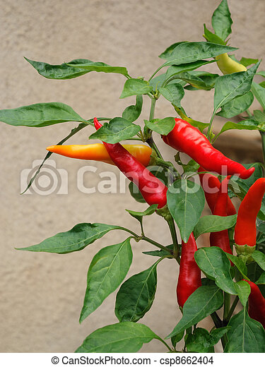 Twig of peppers - csp8662404