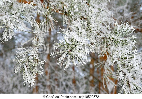Twig of pine hoar-frost covered - csp18520872