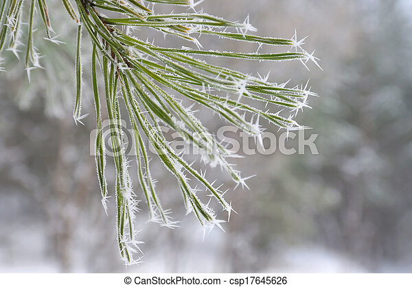 Twig of pine hoar-frost covered - csp17645626