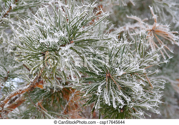 Twig of pine hoar-frost covered - csp17645644