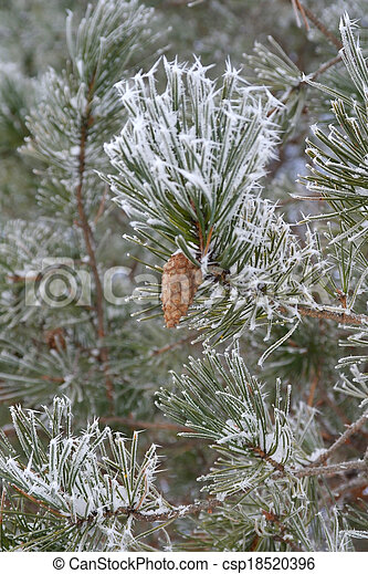 Twig of pine hoar-frost covered - csp18520396