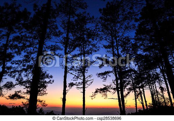 Twilight sky with silhouette pine tree - csp28538696