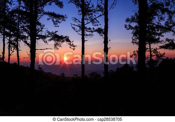 Twilight sky with silhouette pine tree - csp28538705