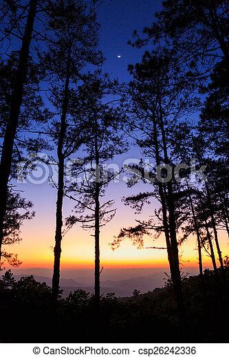 Twilight sky with silhouette pine tree - csp26242336