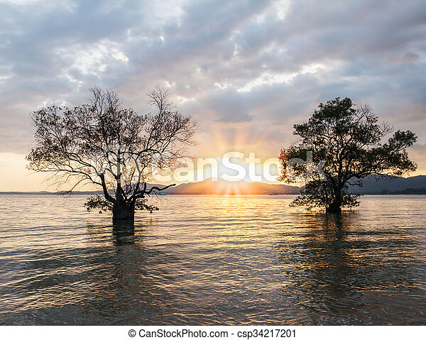 Twin tree in the sea with color of the sunset - csp34217201
