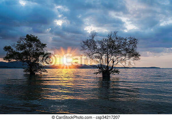 Twin tree in the sea with color of the sunset - csp34217207
