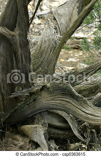 Twisted Tree - csp0363615