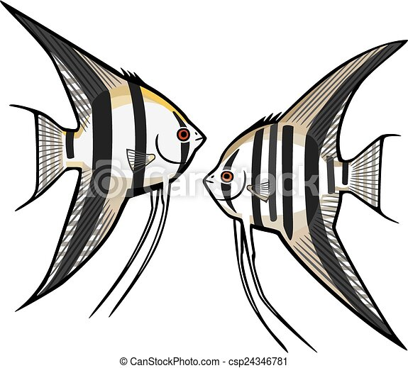 two angelfish vector illustration two kinds of freshwater vector rh canstockphoto com angelfish clipart colorful angelfish clipart